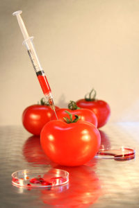 Close-up of syringe in tomato for genetic research